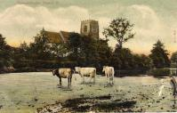 Cows across the river from the church (13) - click for full size image
