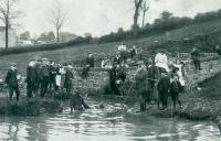 Sheep dipping. Taken near Hampsthwaite around 1910. William Busfield of what is now Lamb Cottage, is the rightmost adult holding the long pole with a hooped end. - click for full size image